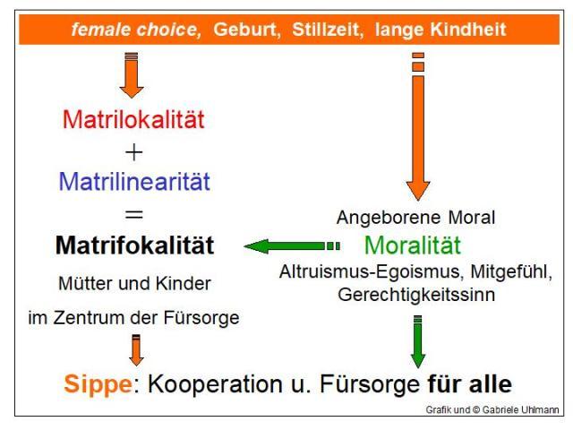 Schaubild Matrifokalität