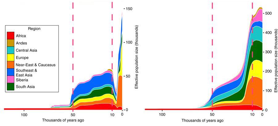 Genetischer Flaschenhals nach Karmin et al. 2015 title=